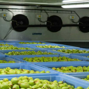 CapTemp Temperature Recording System Ensures Proper Conditions in Fruit Cold Storage Units for Greater Quality Control